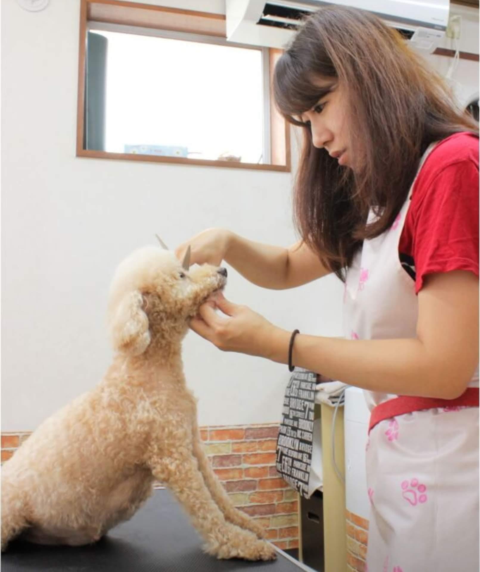 自宅で愛犬サロンオンラインスクール