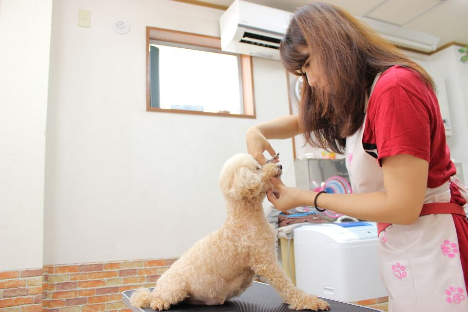 自宅で愛犬トリミング「顔カット&バリカン講座」